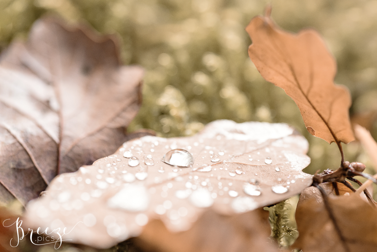 Raindrops on Autumn Leaf, Fine Art Nature Photograph, Home Decor Print, Breeze Pics