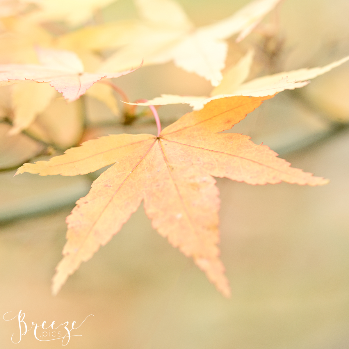 Autumn Leaf Macro Nature Photograph Study, Limited Edition Fine Art Print, Bernadette Meyers