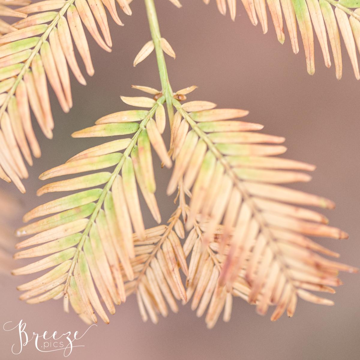 Macro Autumn Leaf Study, Fine Art Photograph Print, Bernadette Meyers