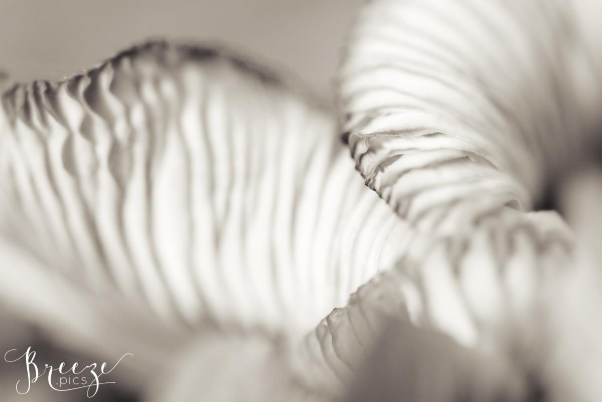 Monochrome Fungi Study, Fine Art Photograph Print, Bernadette Meyers