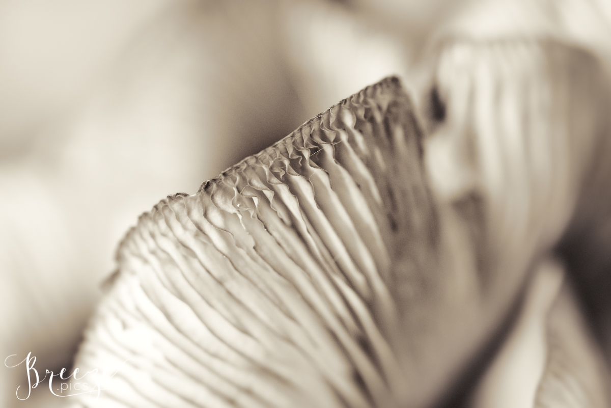Monochrom Macro Fungi Study, Home Wall Art, Breeze Pics