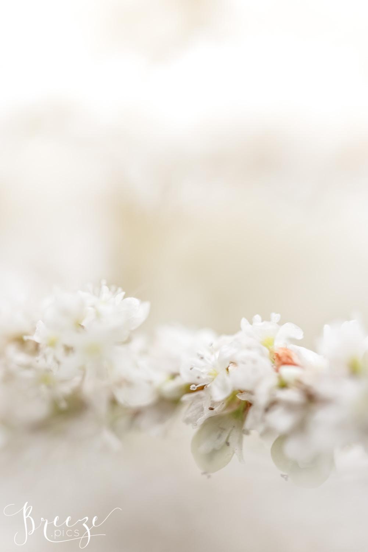 White magnolia flowers fine art macro nature photograph, limited edition home decor prints, Bernadette Meyers