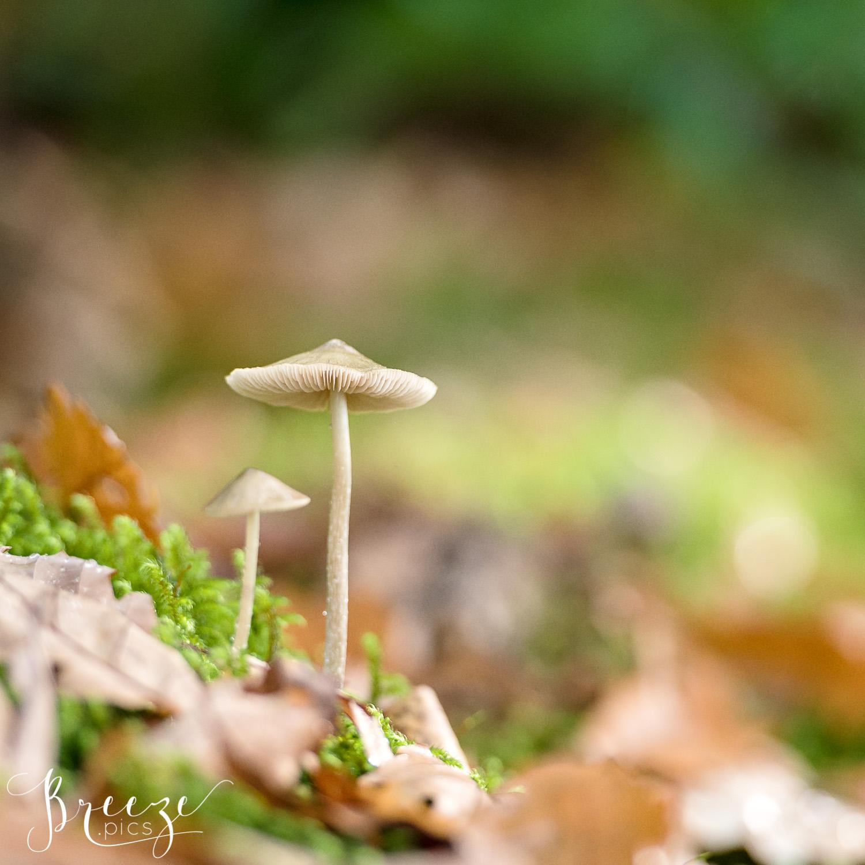 mushroom limited edition fine art print