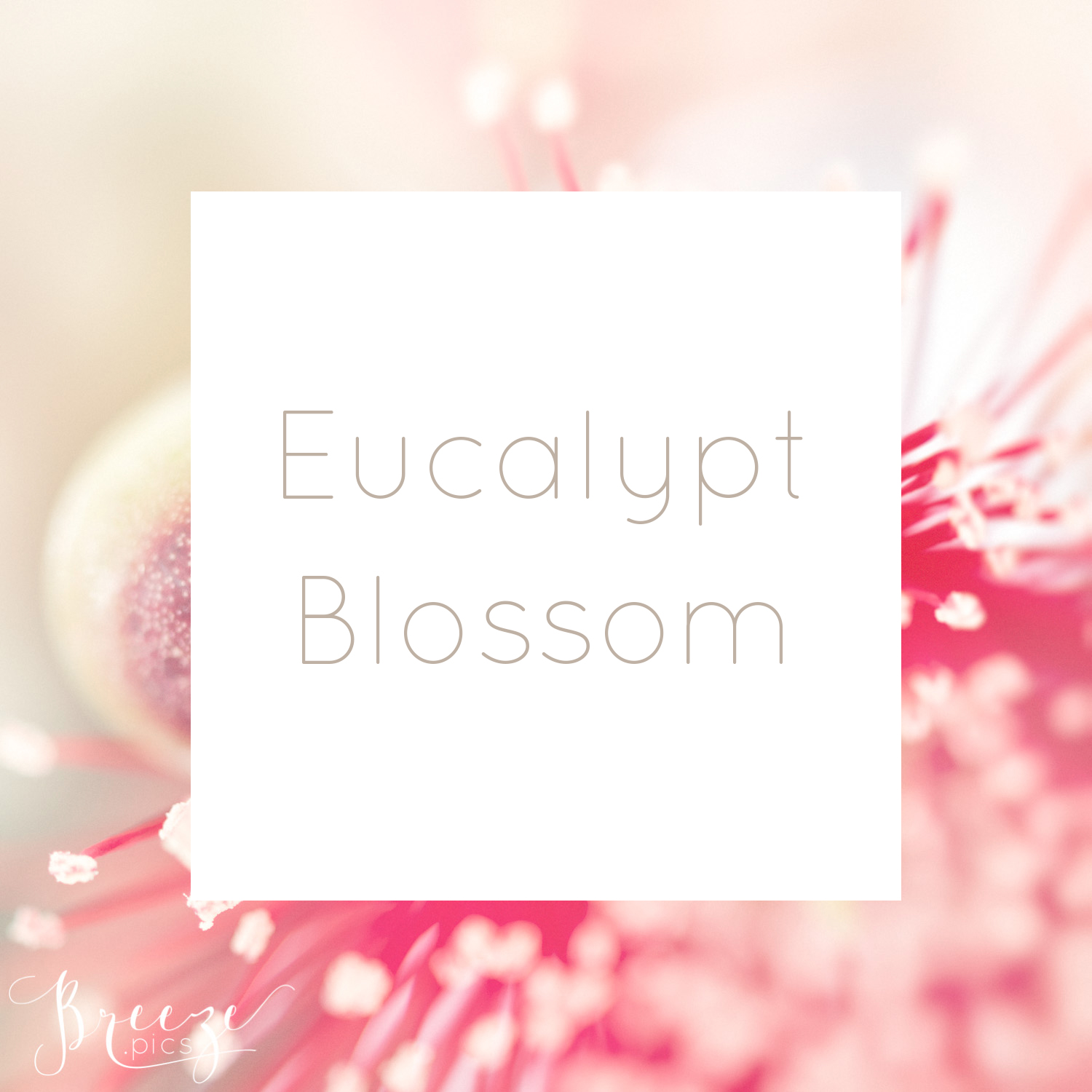 EucalyptBlossomCollection_Titles.jpg