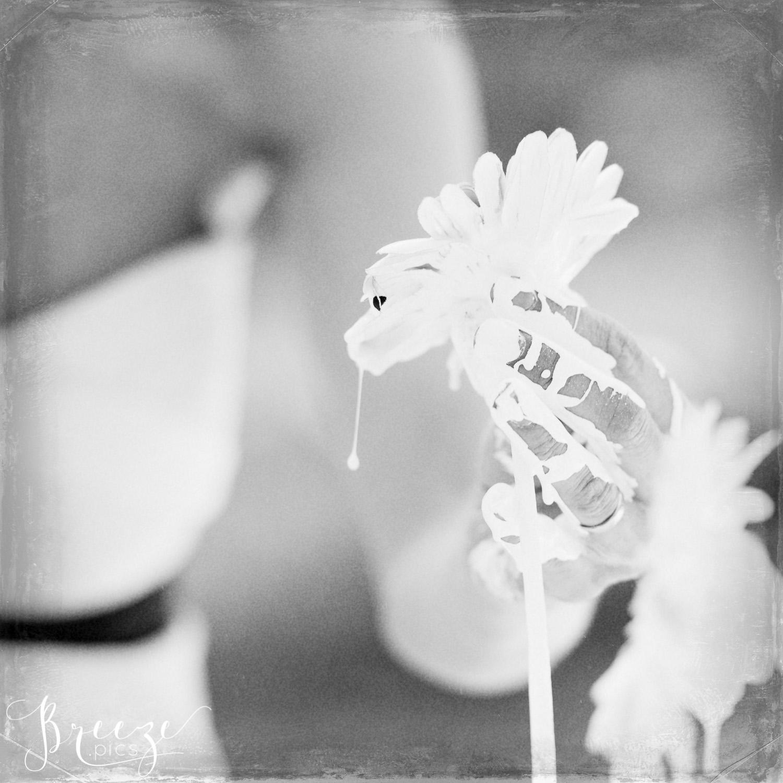 black & white fine art photography, home wall art, Breeze Pics