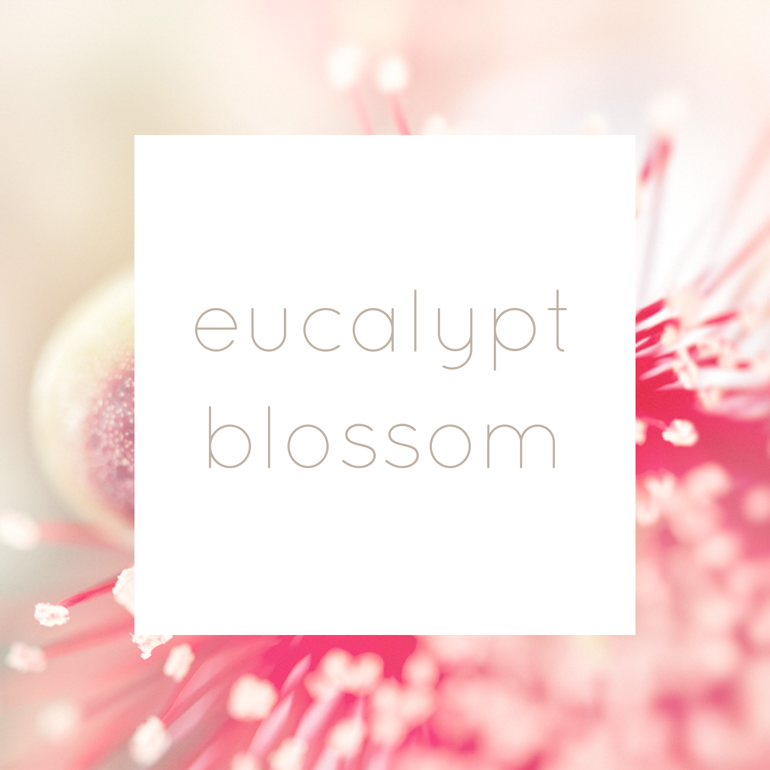 EucalyptBlossomCollectionTitle.png