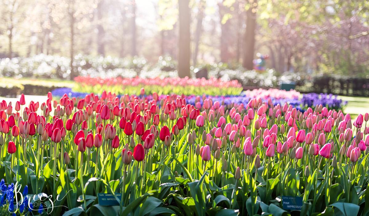 Spring_Bulbs_Bernadette_Meyers--30.jpg