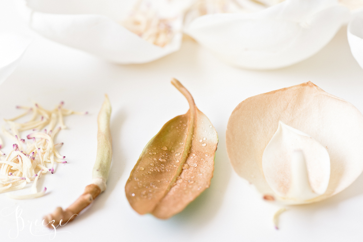 Magnolia_flower_parts_study_3.jpg