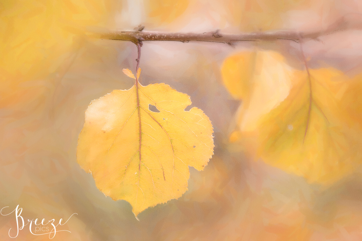 Apricot autumn leaf digital painting, limited edition print, home wall art, Breeze Pics