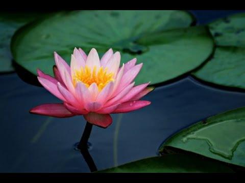 lotus x.jpg