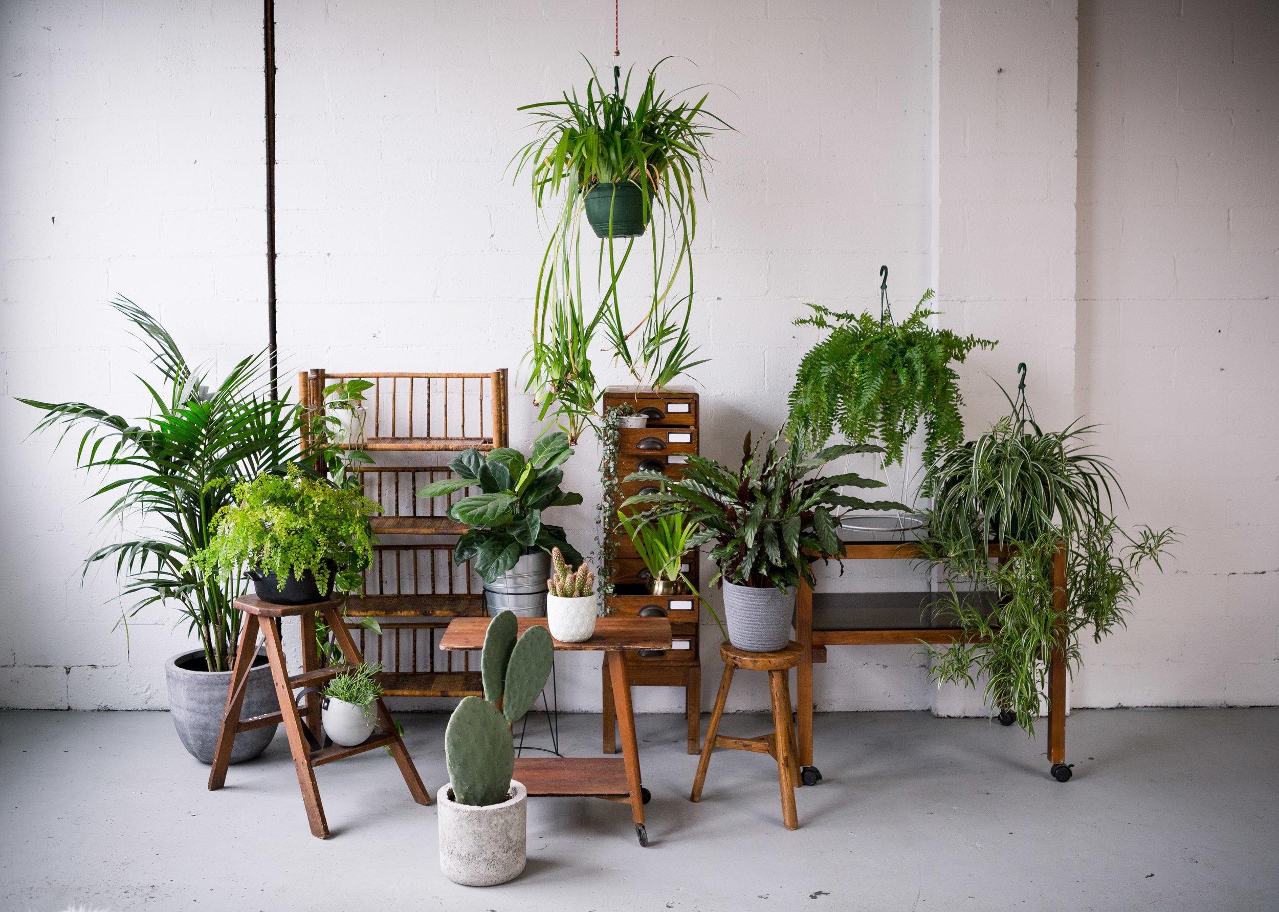 Studio jungle.jpg