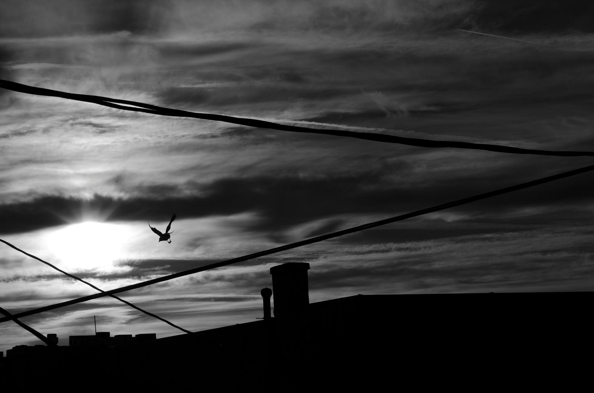 Sunset_Bird_BW-small-size.jpg