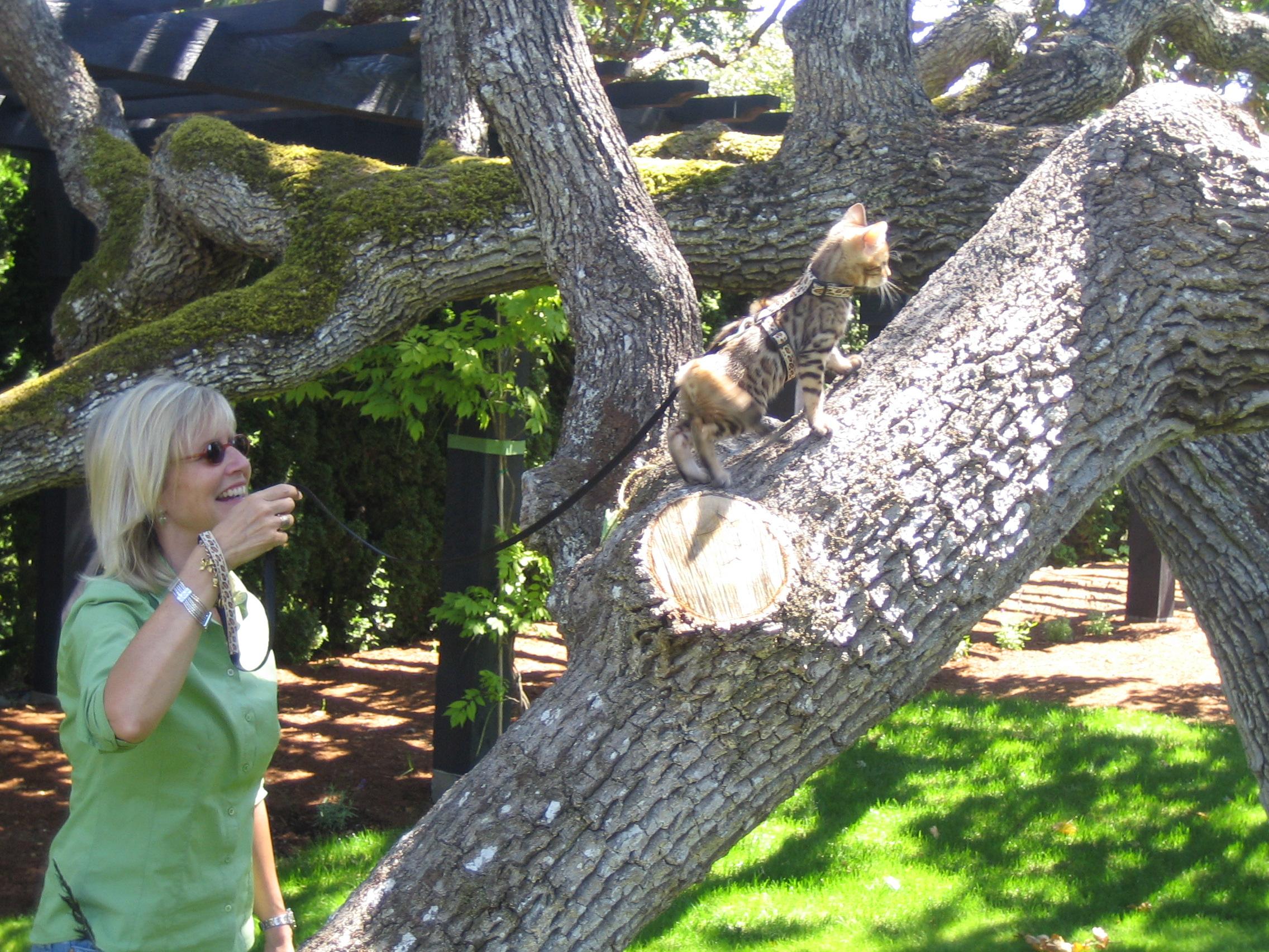 jas in tree 2.JPG