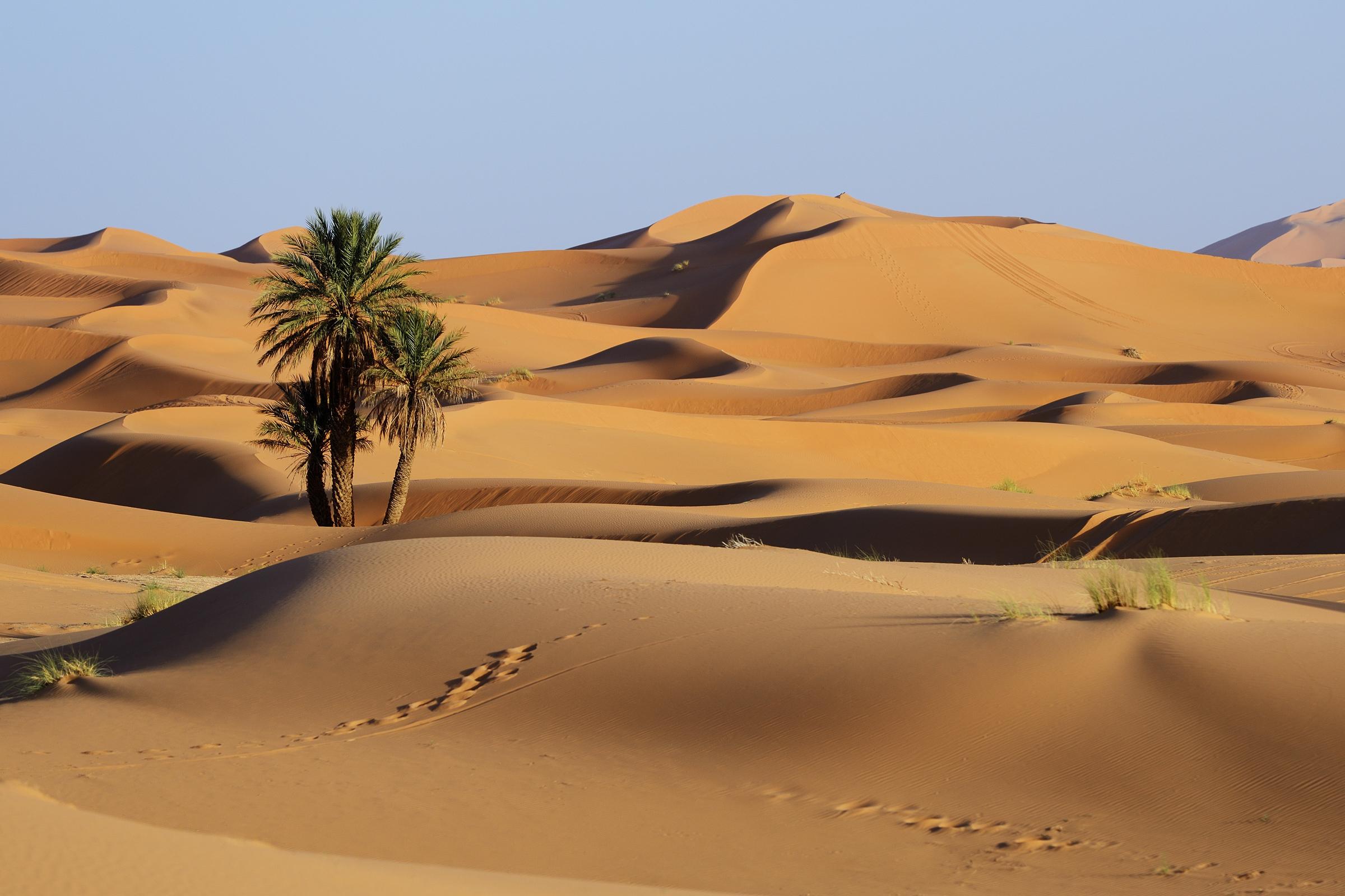 Saharan sand dunes, Morocco