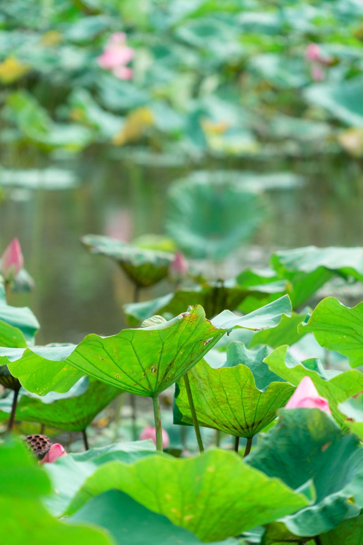 taipei-botanical-gardens
