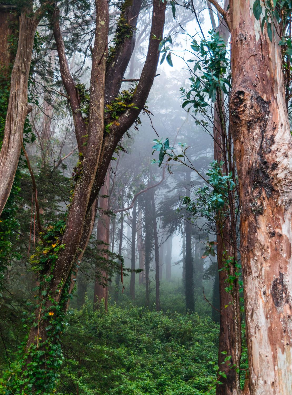 san-francisco-fog