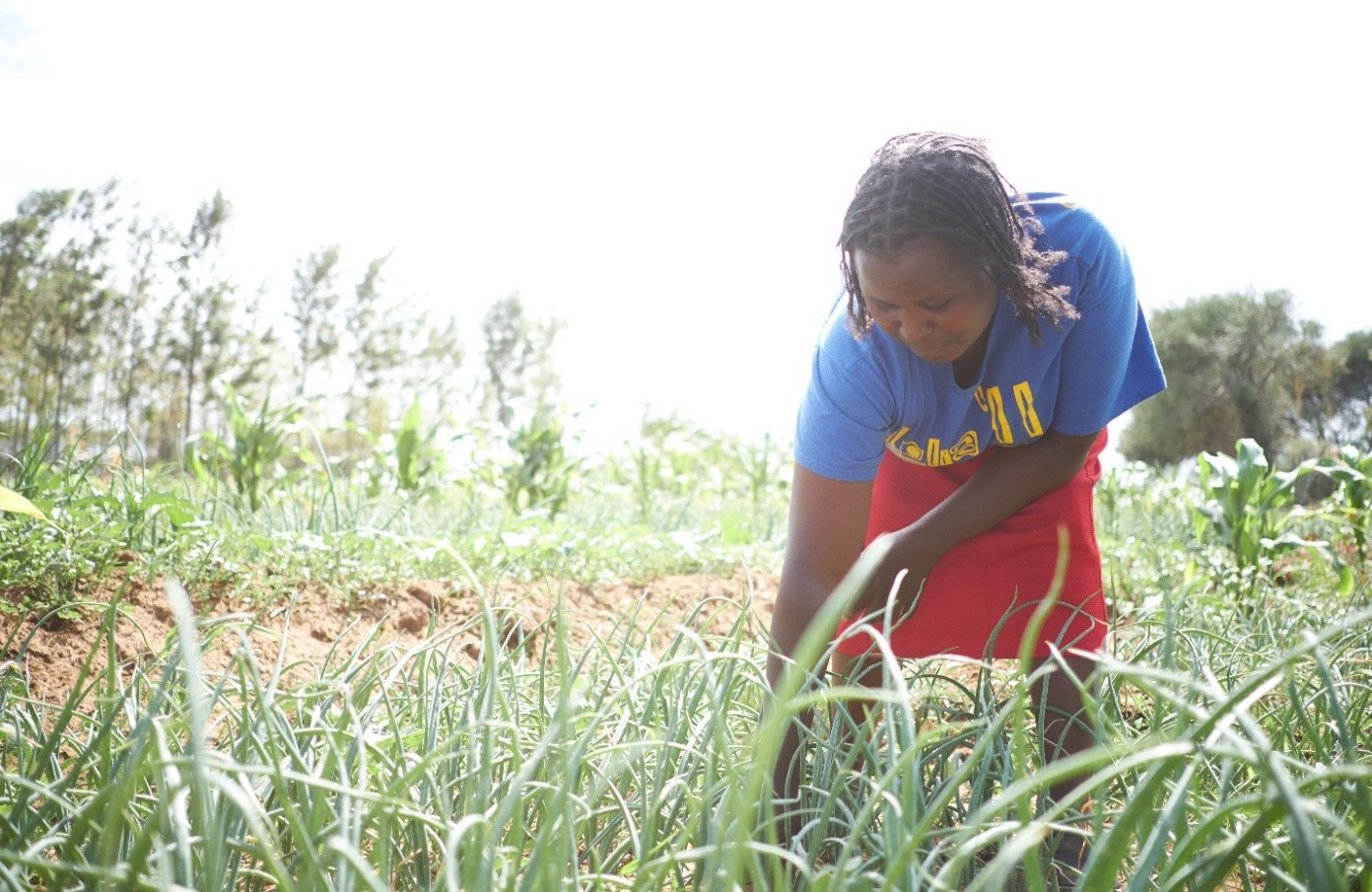 Chelagat in her onion farm