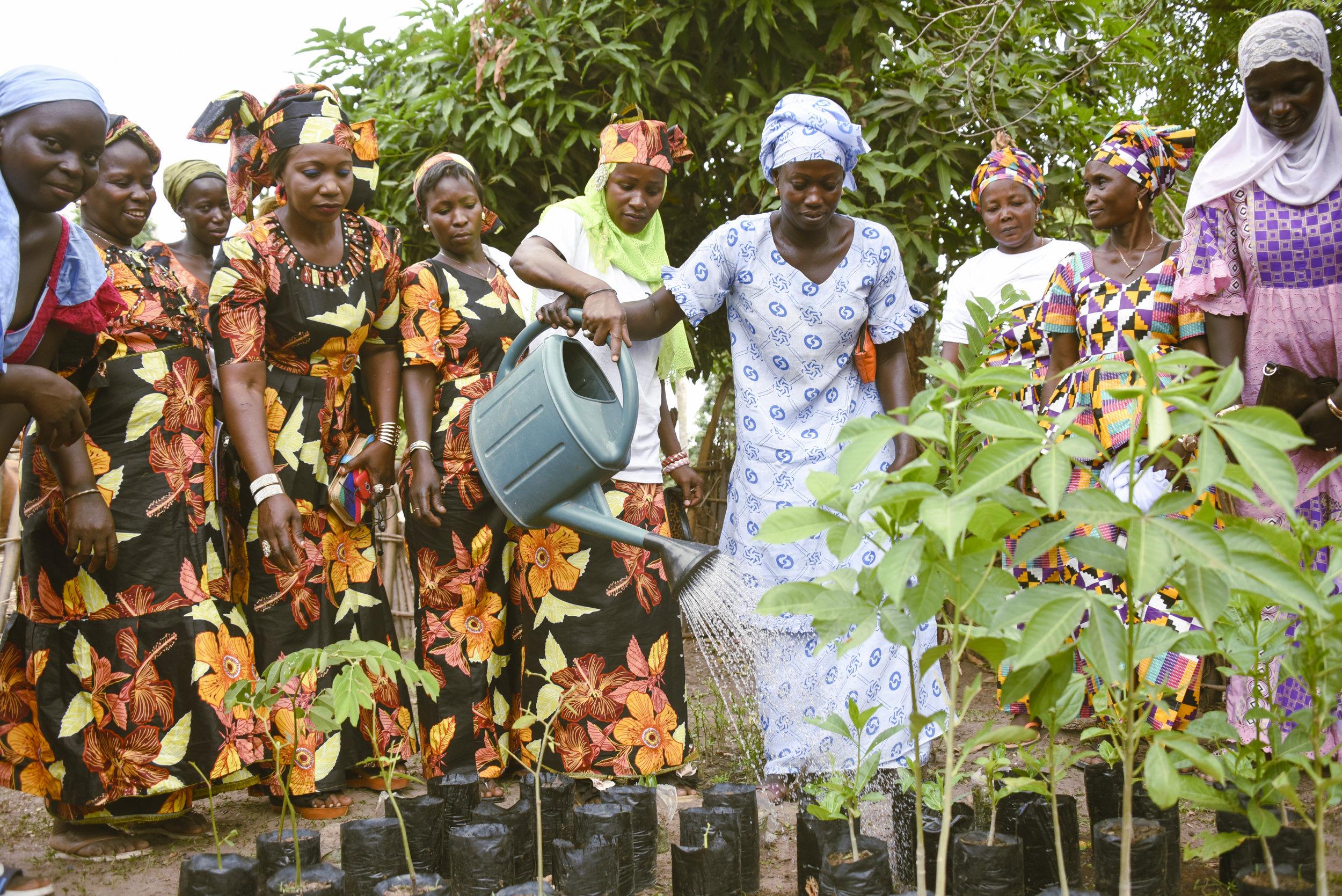 Women of Senegal
