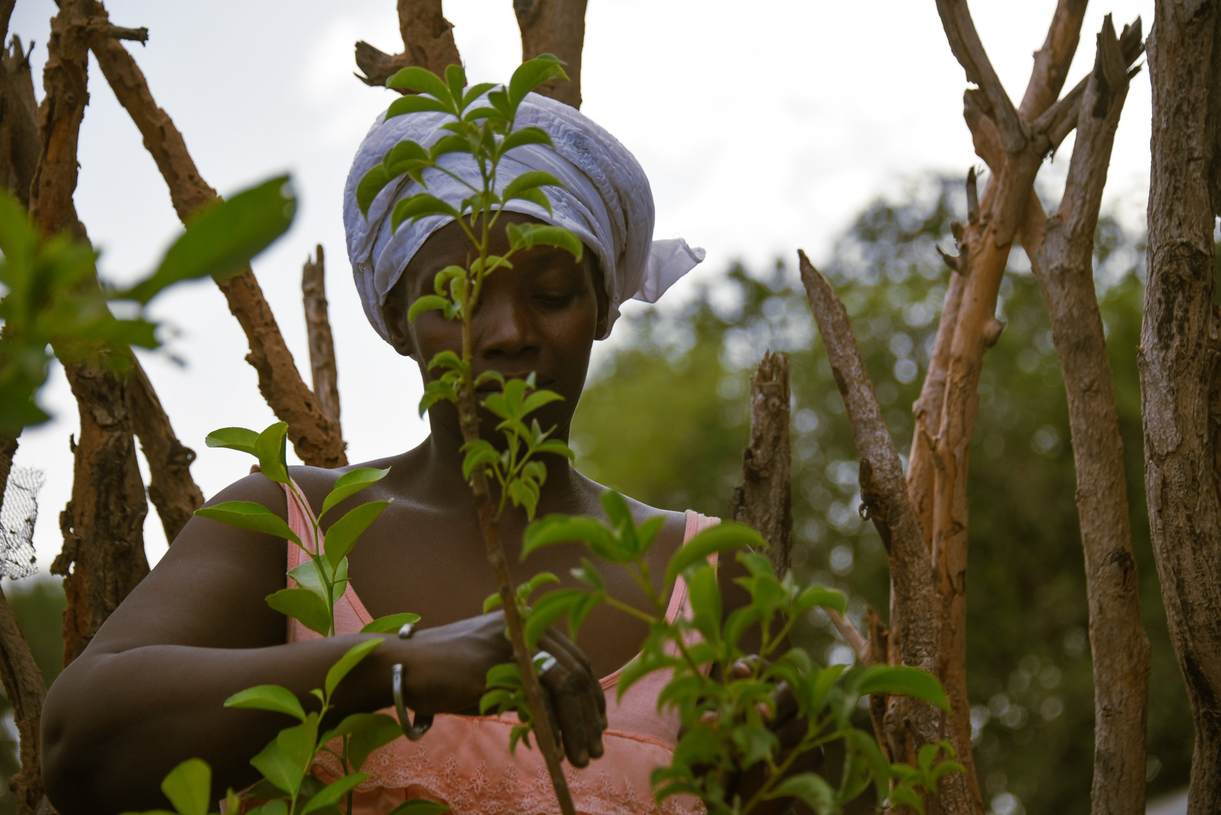 - Ndella Badiane works in the community garden set up by the village association in Ouniock, Casamance. Credit: Traidcraft Exchange\Kate Dixon