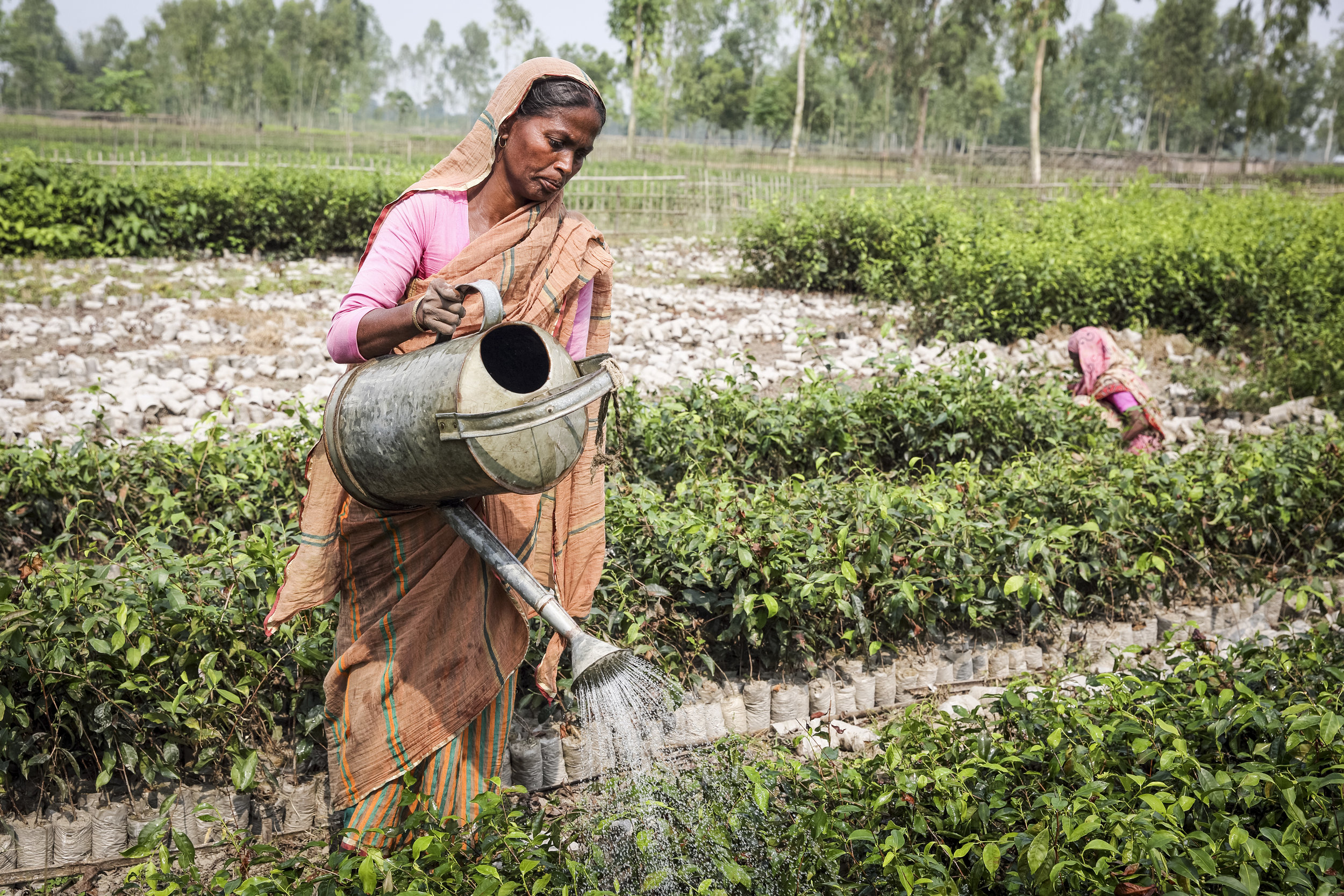 - Shakhina works in a tea plant nursery in Bangladesh. Credit: Traidcraft Exchange/GMB Akash