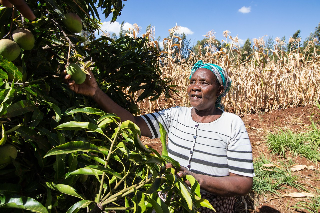 - Alice is a farmer and Hidden Entrepreneur from Meru County, Kenya. Credit: Traidcraft Exchange/Kevin Ouma