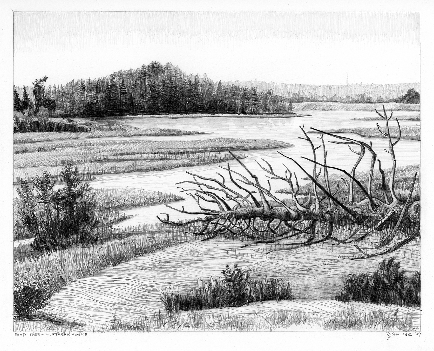 "Dead Tree-Northern Maine   Pencil, 15x22"", 2008"