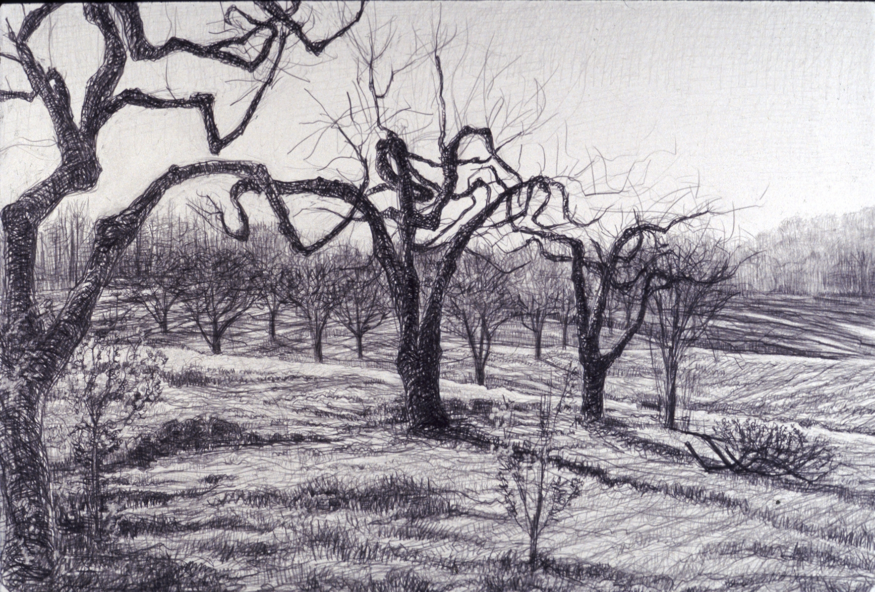 diagonal orchard.jpg