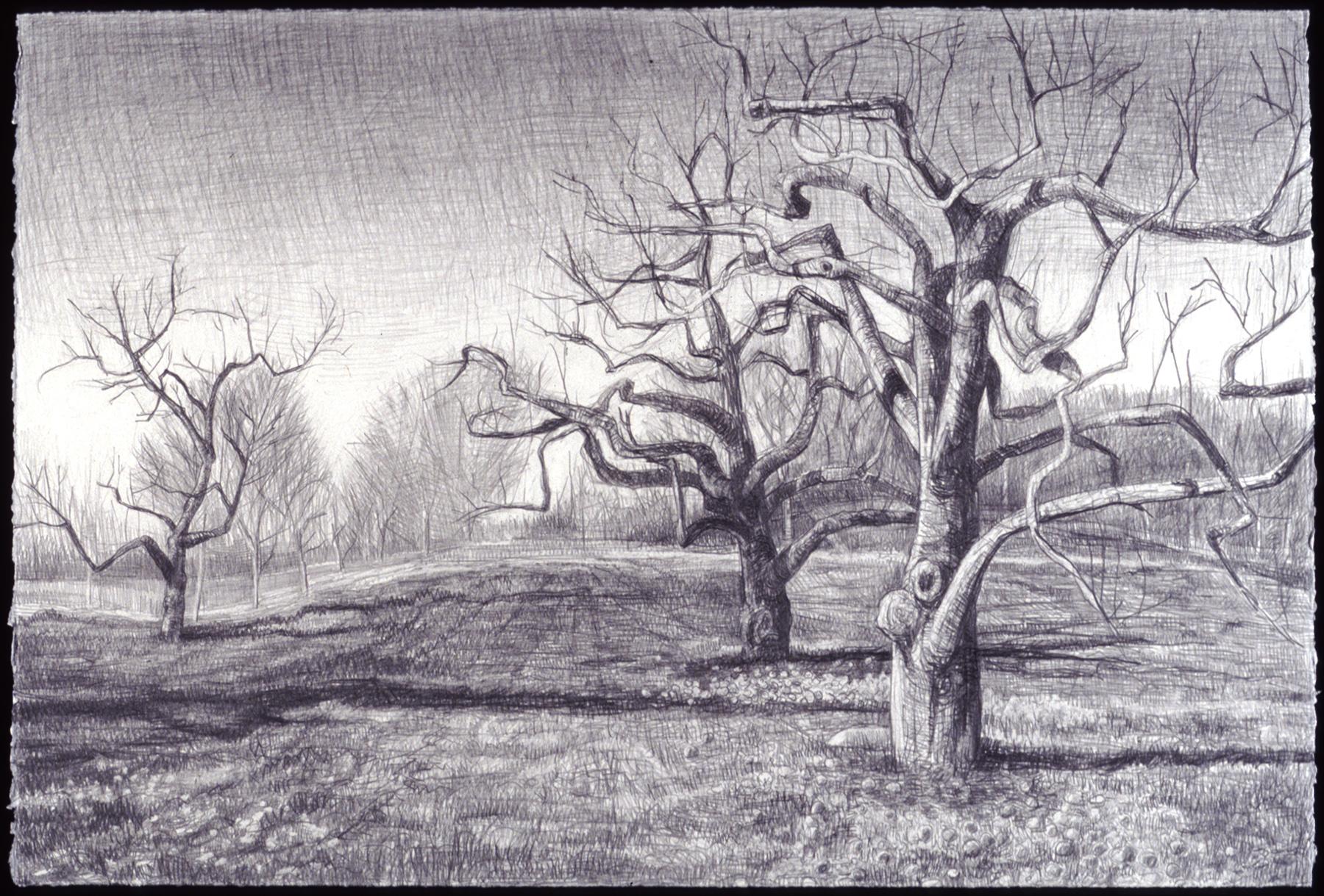"Receding Orchard   Woodcut, 14¾ x17½"", 200"