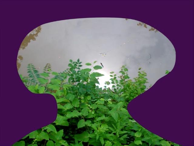 Purple Shroom.jpg