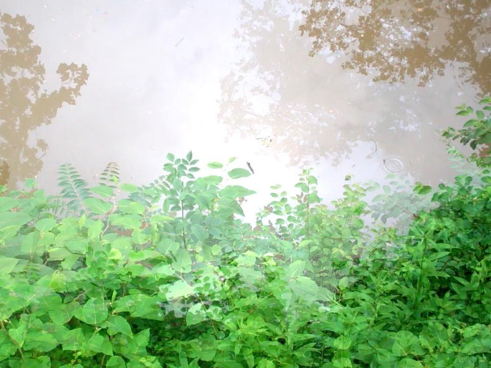 River Fog.jpg