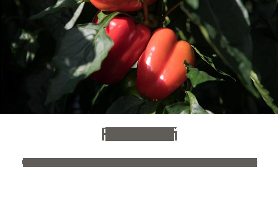 forsidumynd_headermyndir_ENGArtboard-4.png