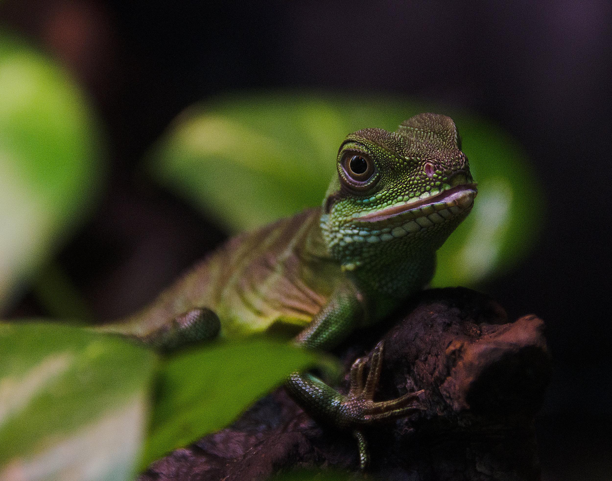 Spencer_Drake_Korean_Lizard_Photography_Lizard_Korean_Wildlife_Nature.jpg