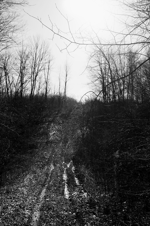 War Path.jpg