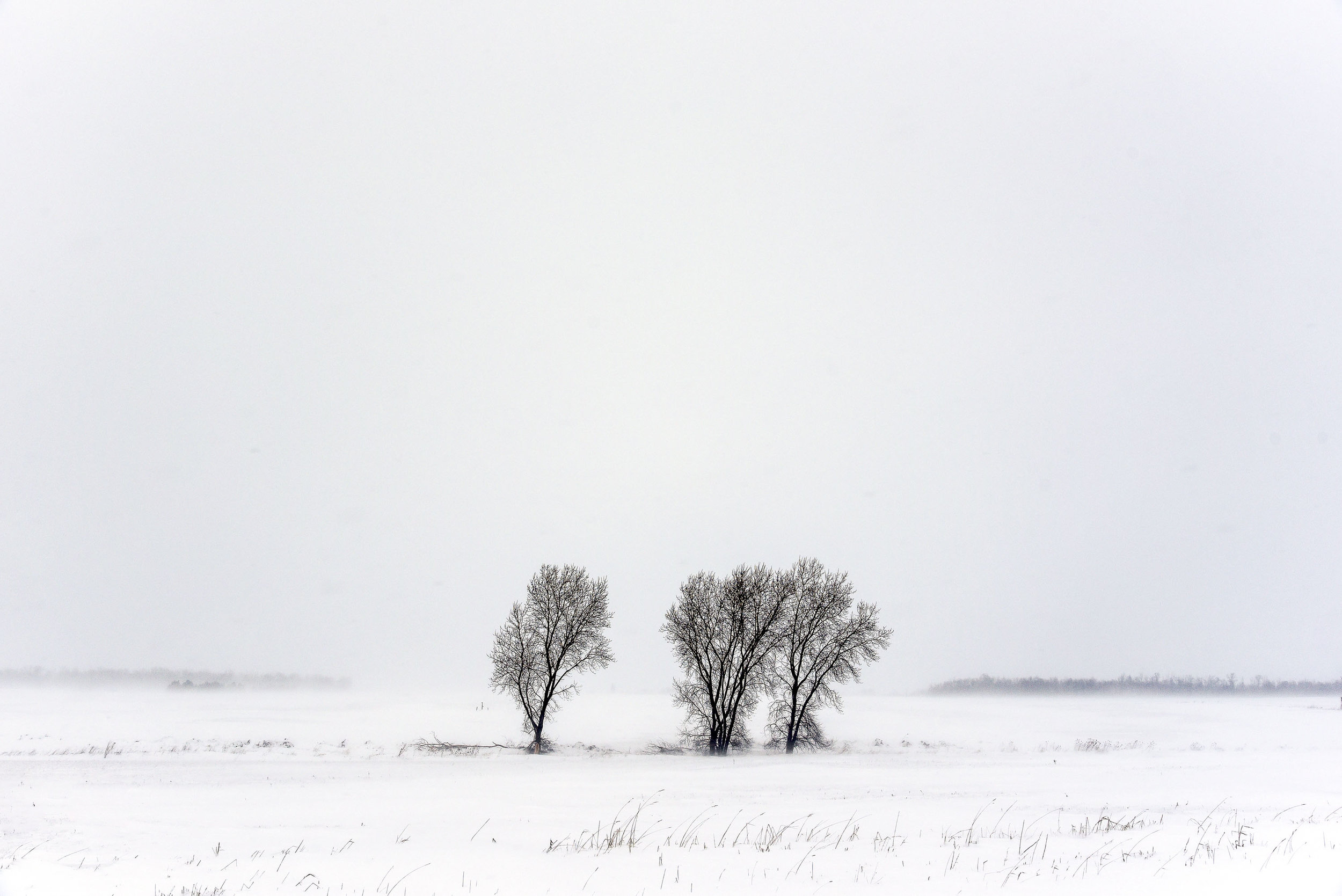 three trees.jpg