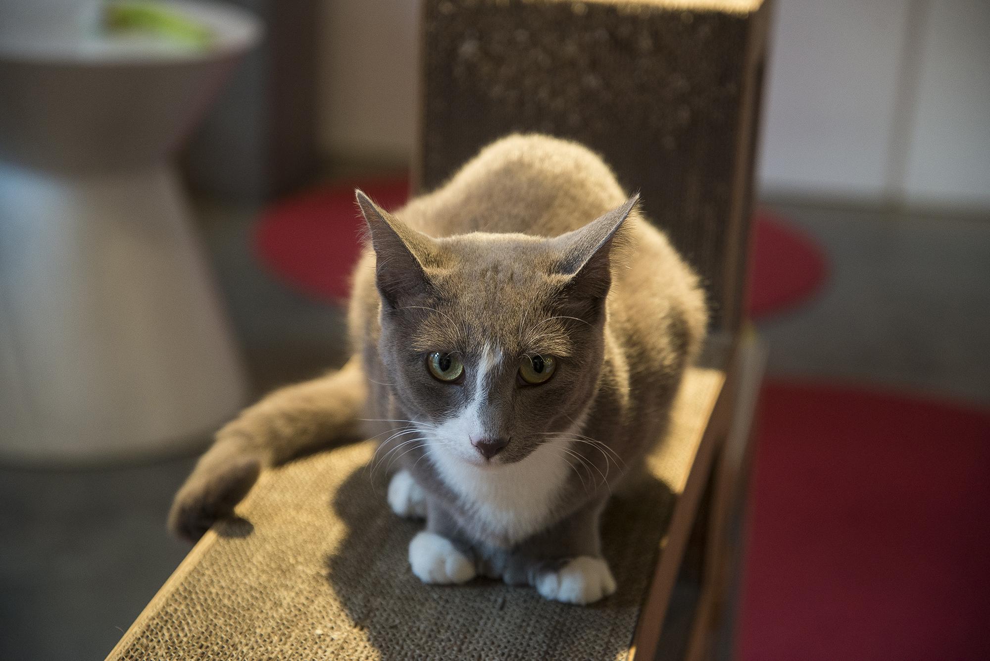 Cat in the sun.jpg
