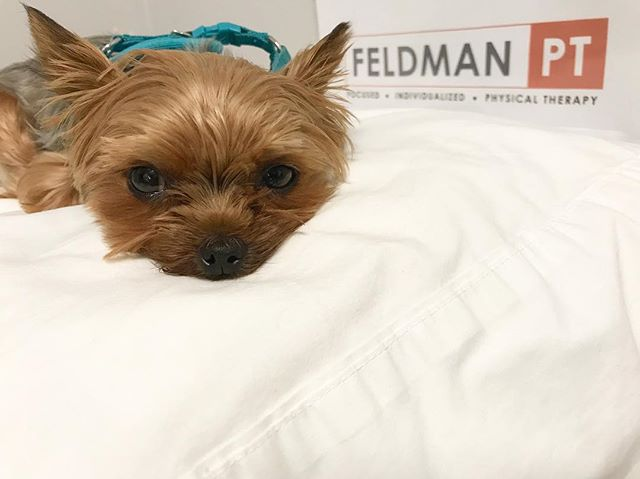 Todays workday was not too ruff! 🐶 #PiperthePup #officedog #feldmanpt #feldmanphysicaltherapy