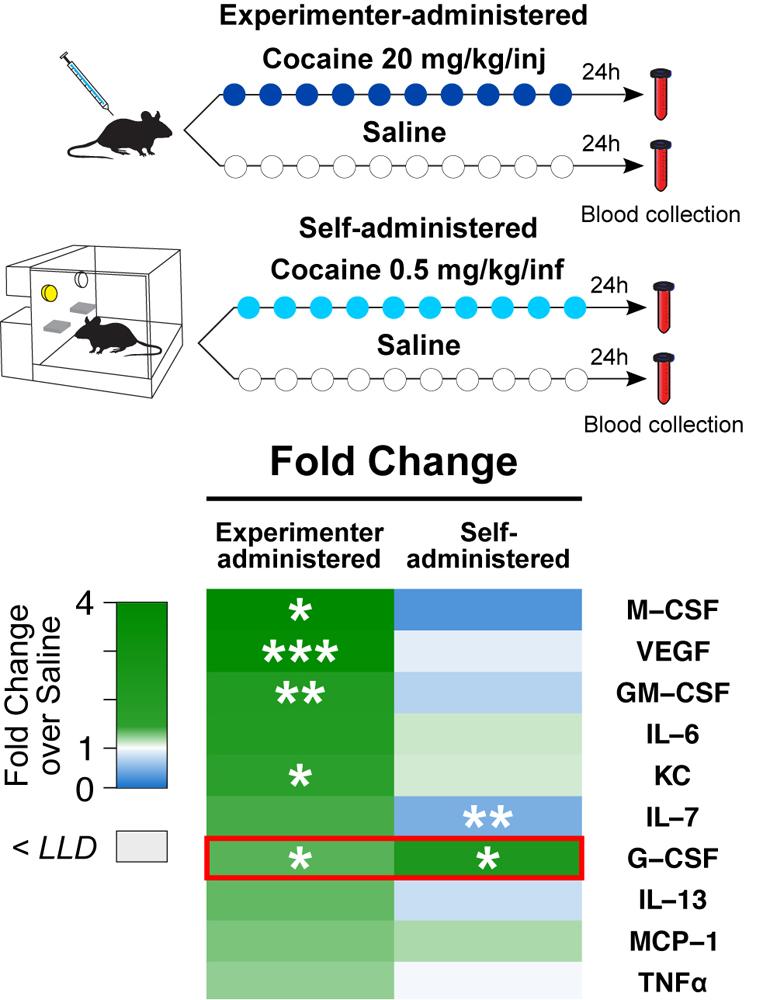 Figure for G-CSF website.jpg