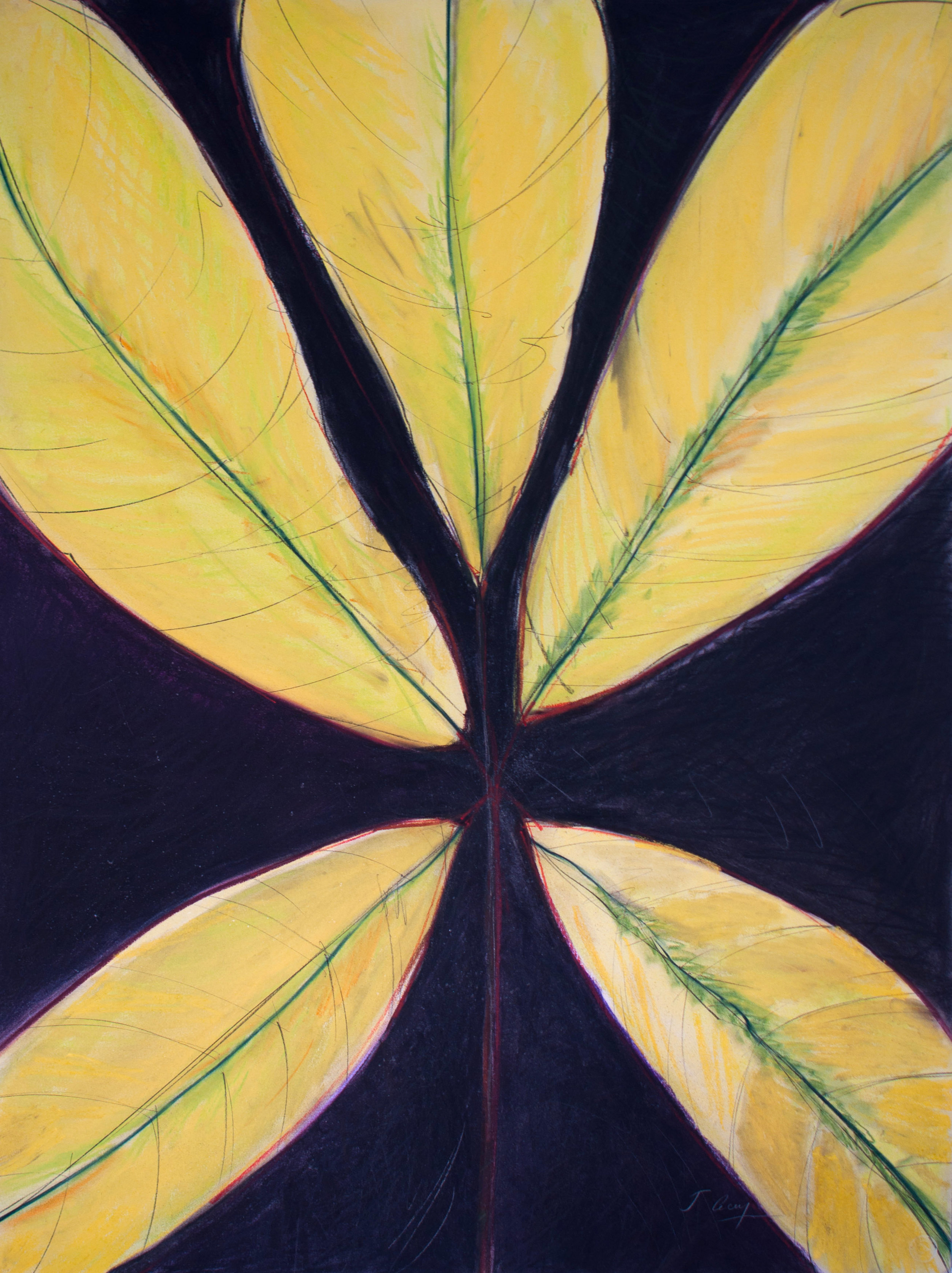 Acey_Jo-Ann__Yellow Leaf_ Pastel, Charcoal and Graphite on Paper, 2013.jpg