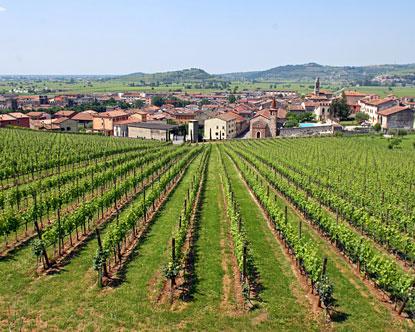 Verona wineries