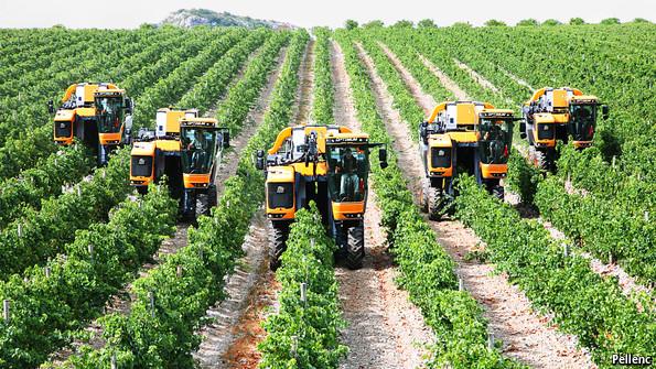 grape-picking-machine