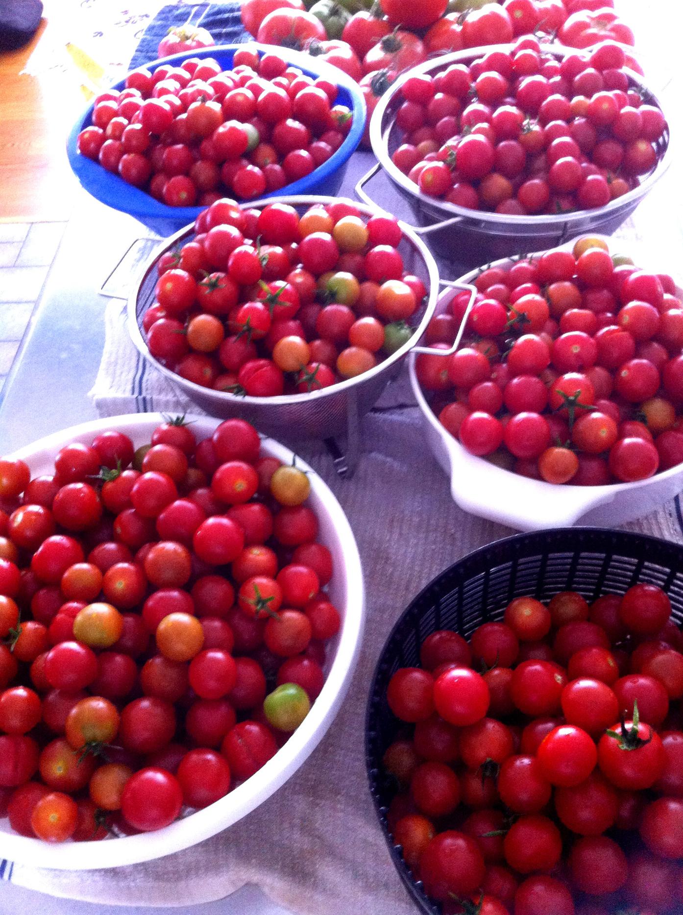 2015 Cherry Picked.JPG