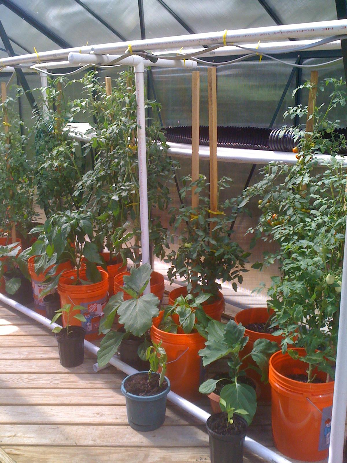 2010 GH Plants.JPG