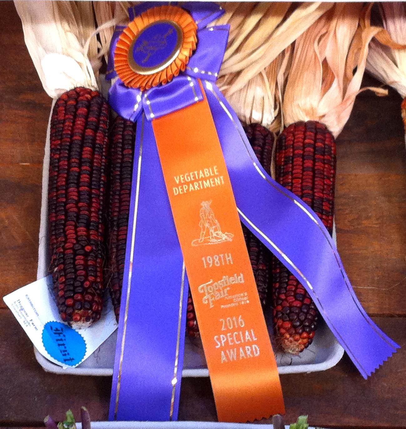 2016 Corn Ribbon.JPG