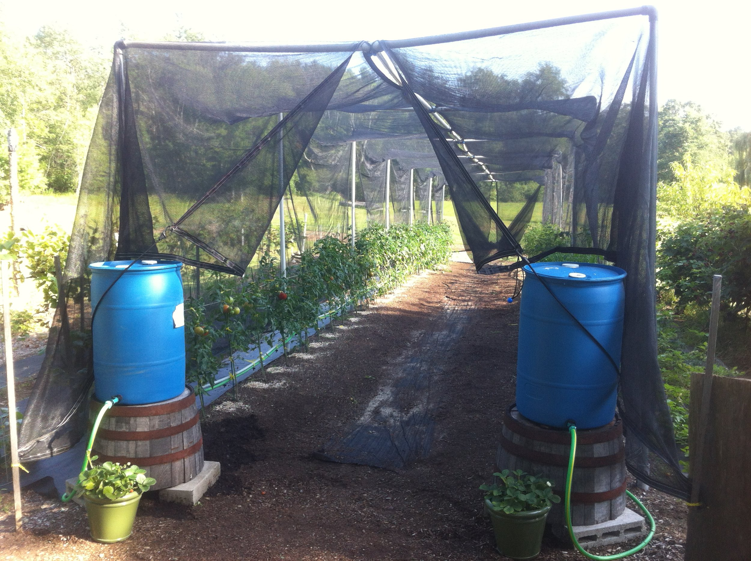 Drip lines for screened area to automate and control water -