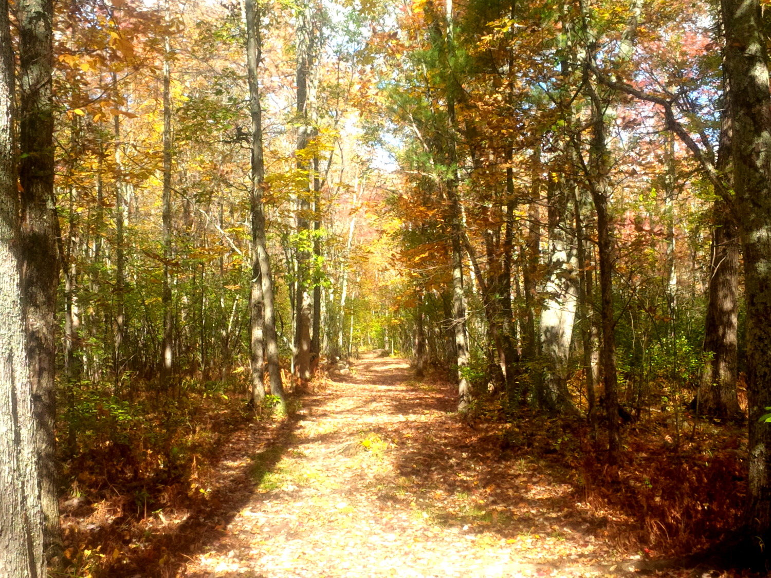 Trails and stone wall behind farm area, perfect for walks and recreation -