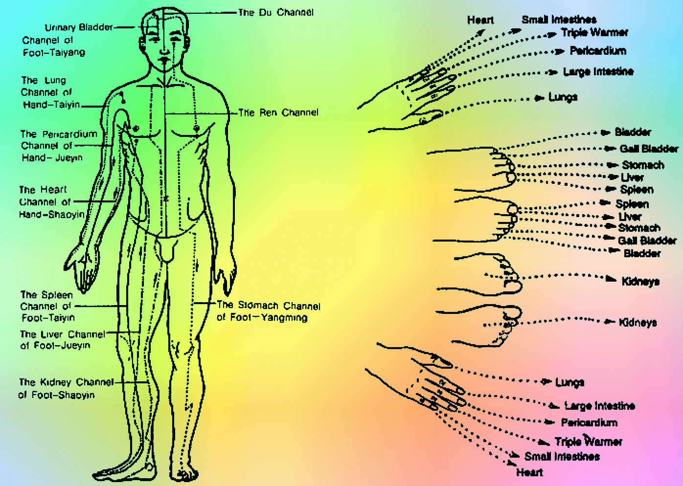 Shiatsu uses the Chinese meridian system