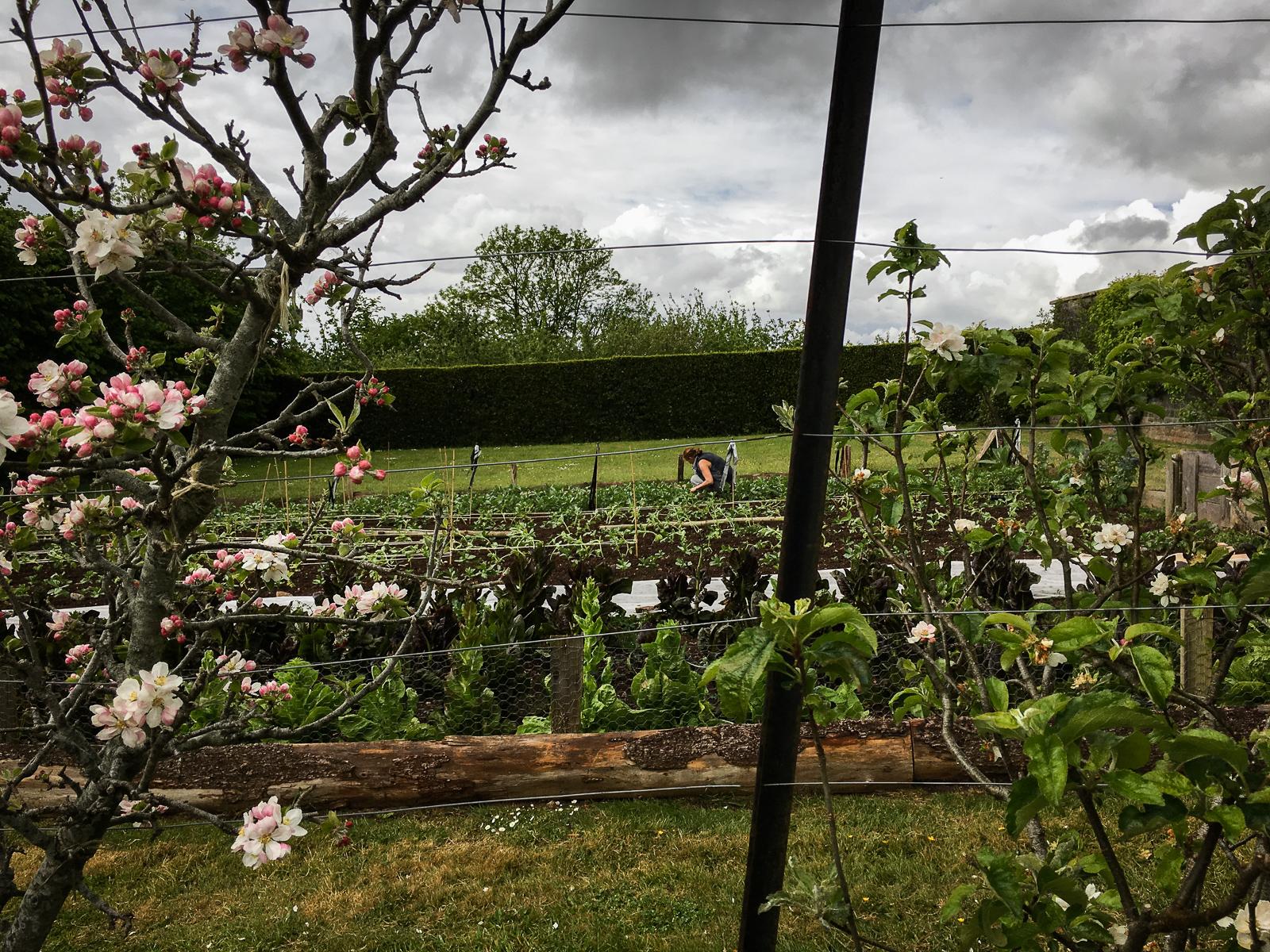 The Ethicurean Gardens