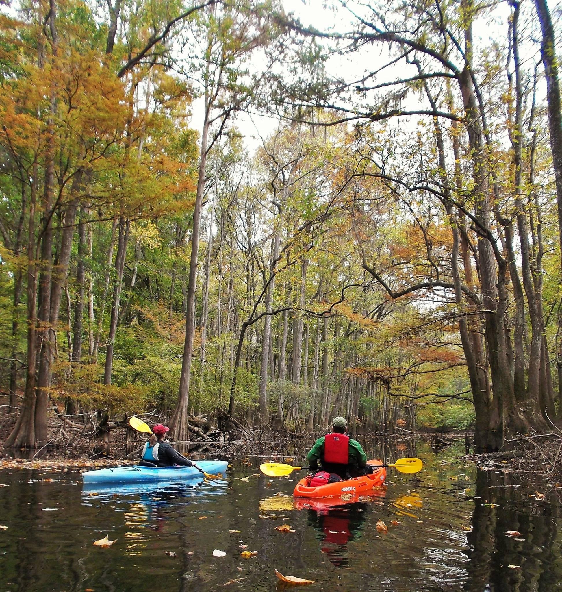 Kayakers on Cedar Creek. Photo by Jtmartin57