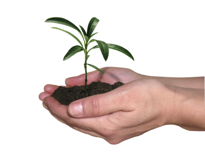 Small plant in hand.jpg
