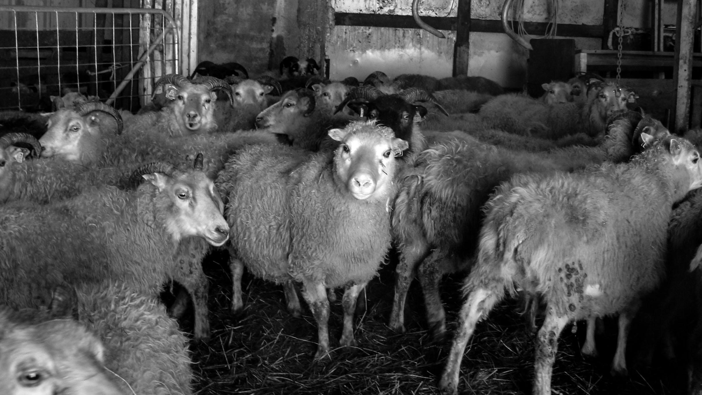 Neðri - Hóll Farm